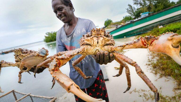 Huge Caribbean KING CRAB 🦀 RUNDOWN!! Jamaican Seafood Tour – Jamaica! 🇯🇲